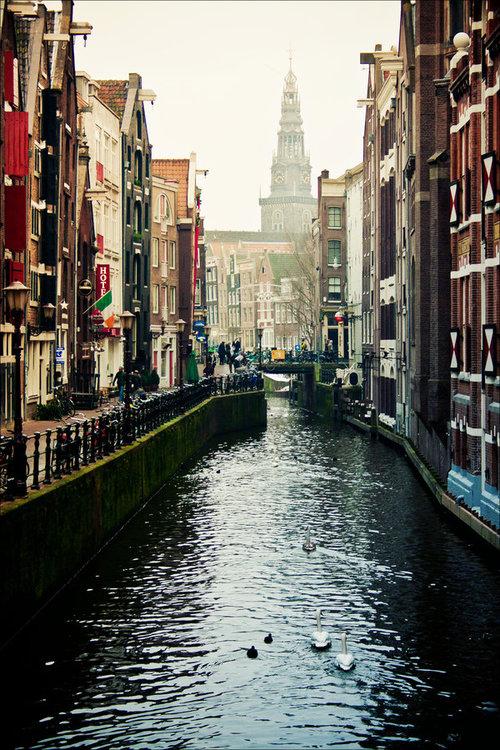 Amsterdam_swans_by_krapivka2007-d37kmj3_large