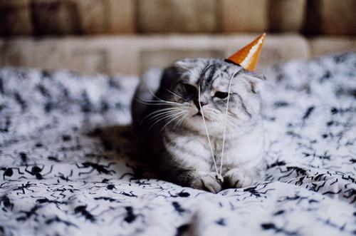 Katze Partyhut
